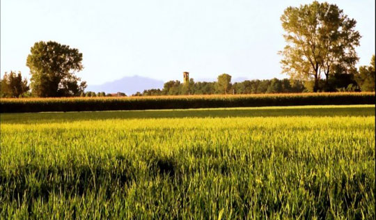 Milaan_parco-agricolo-sud