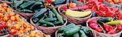 Biologische markten in Milaan