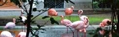Flamingo's bij Villa Invernizzi